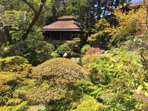 Japanese_Tea_Garden_David